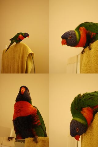 Barry collage in bathroom