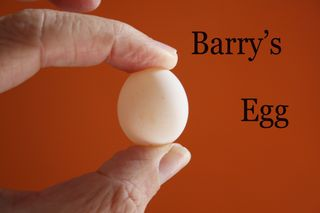 Barry's egg close up