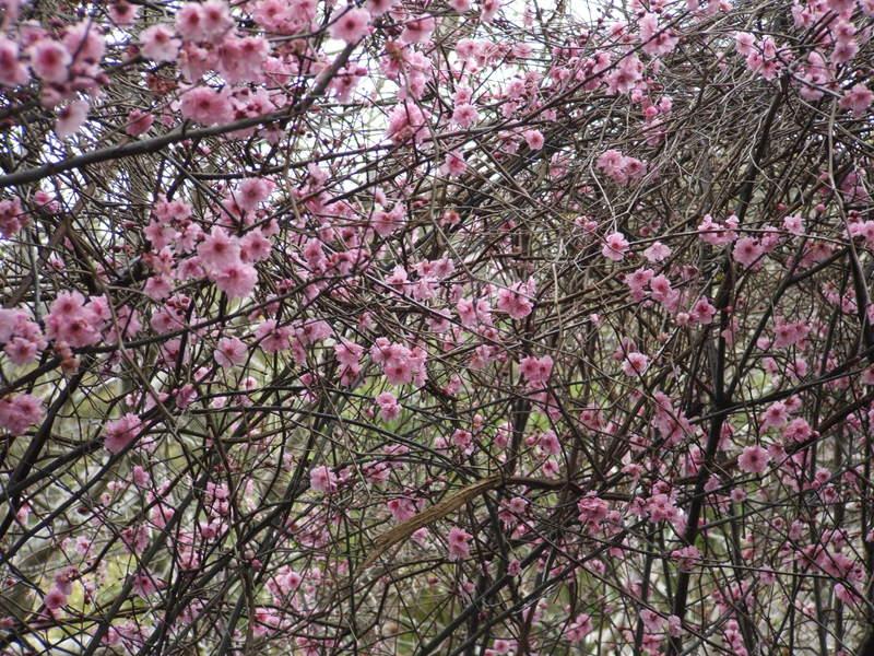 Spring_has_sprung_004