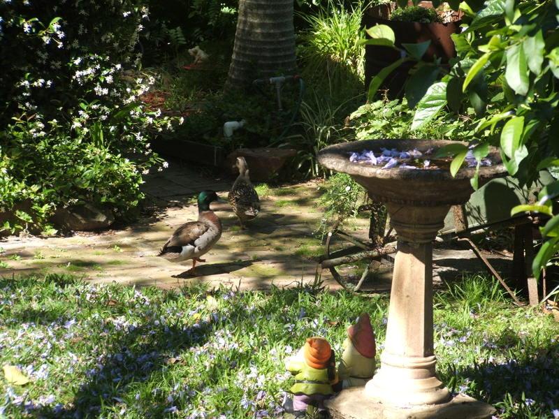 Quacky_visitors_again_014