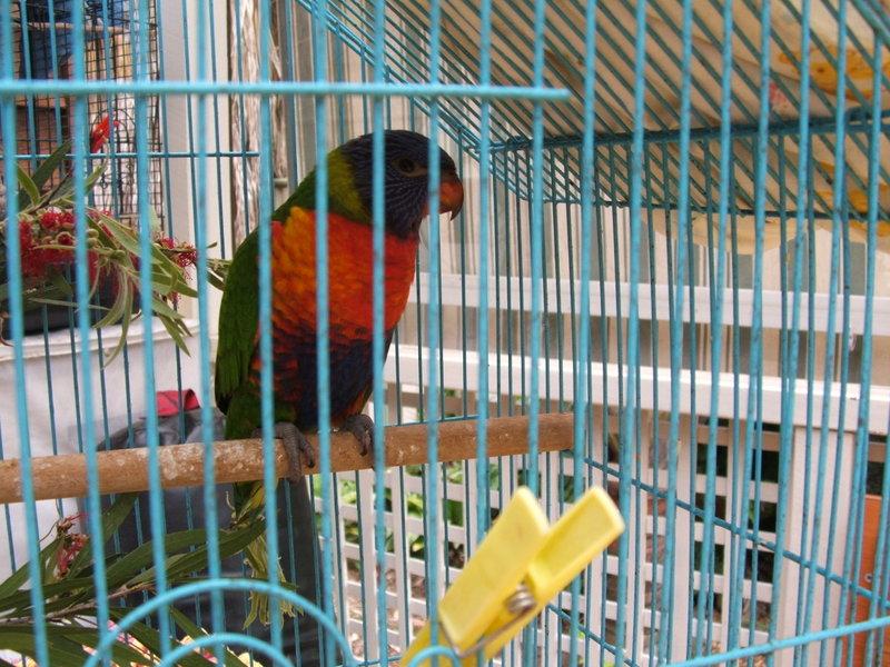 The_birdhouse_011_4