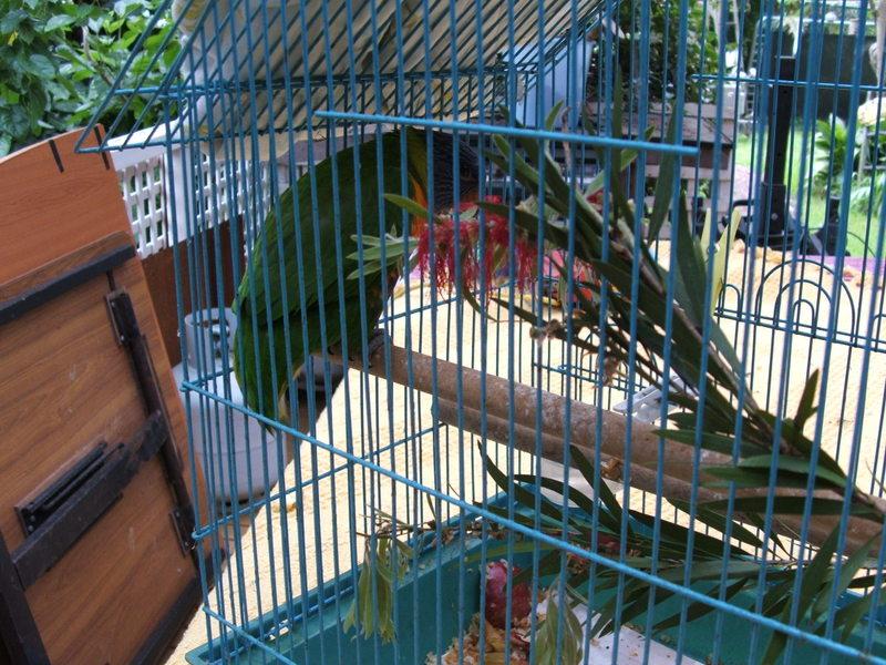The_birdhouse_013