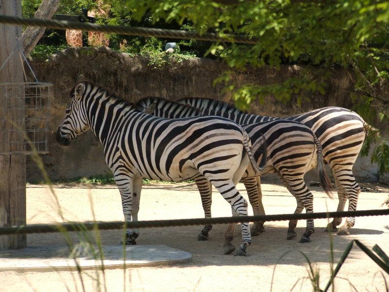 Zoo_028